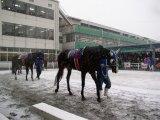 パドックを周回する7レースの出走馬たち