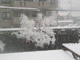 雪は一向に止まない。装鞍所の木はまるで樹氷…