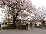 2003年4月14日北関東桜花賞。桜が咲いていた